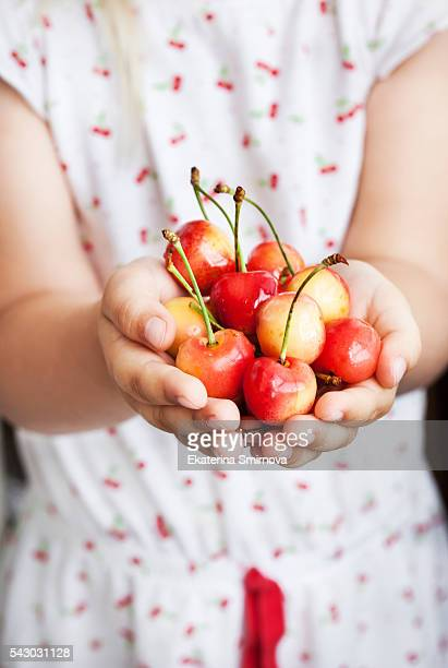 Handful  of fresh wet pink cherry in little girl`s hands