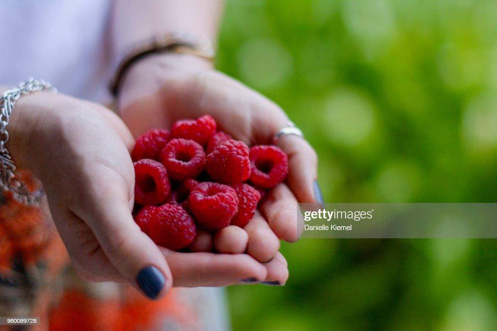 Handful of home grown raspberries, side view : Stock-Foto