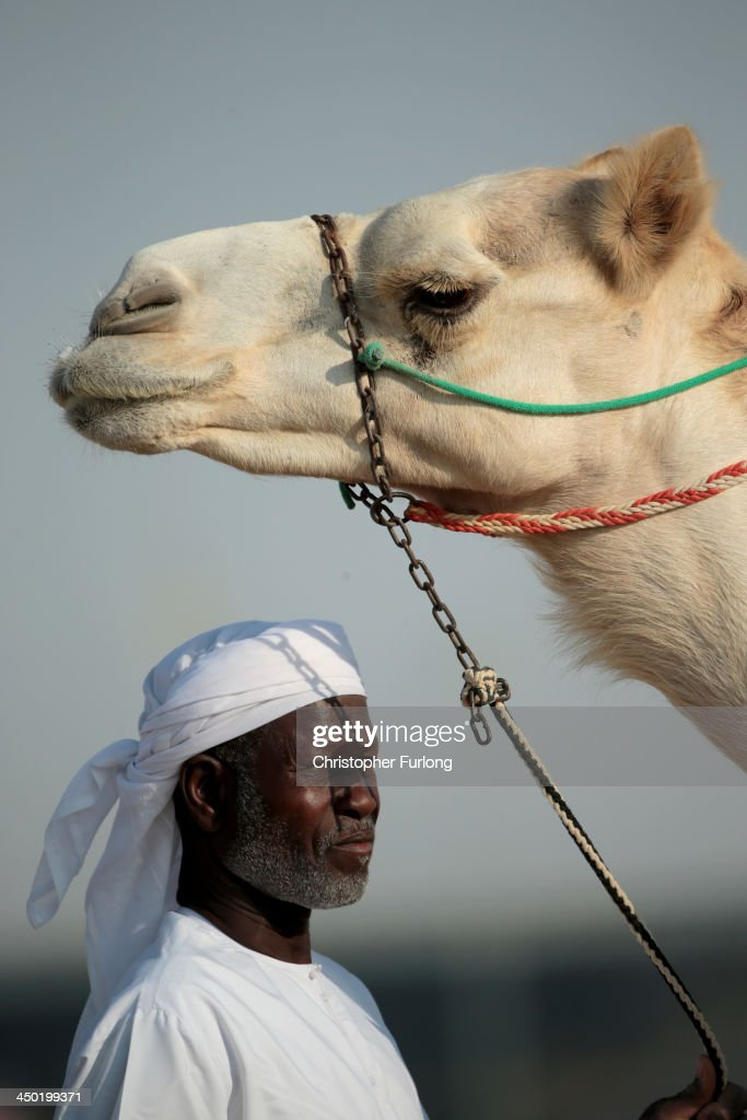 A handler and his camel wait to race at Dubai Camel Racing Club during the Al Marmoum camel racing season on November 17, 2013 in Dubai, United Arab Emirates. Camel racing is one of the oldest sports in the Middle East. Historically children from India were used as jockeys on the camels until it was outlawed in 2002. Today robot jockeys are used and include shock absorbers and GPS tracking systems. The camel's owners control the robot's whips from their speeding four wheel drives at the side of the track. Throroughbred racing camels can be as valuable as one million US dollars.