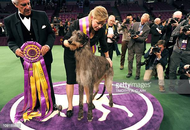 Handler Angela Lloyd and Hickory the Scottish Deerhound pose for photos after winning Best in Show during the 135th Westminster Kennel Club Dog Show...