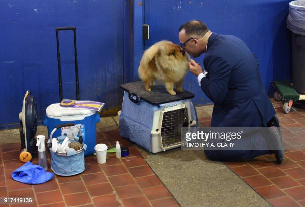 TOPSHOT Handler Diego Garcia and his Pomeranian wait in the benching area on Day One of competition at the Westminster Kennel Club 142nd Annual Dog...