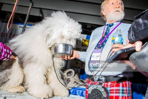 A handler gives water to an Old English Sheepdog during the annual Meet the Breed event ahead of the 141st Westminster Kennel Club Dog Show in New...