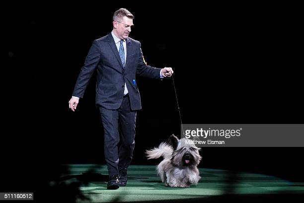 Handler Larry Cornelius and Charlie a Skye Terrier compete for 'Best In Show' during the second day of competition at the 140th Annual Westminster...