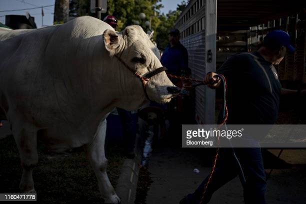 A handler leads a bull to a trailer outside the Agriculture Building during the Iowa State Fair in Des Moines Iowa US on Thursday Aug 8 2019 The 2020...