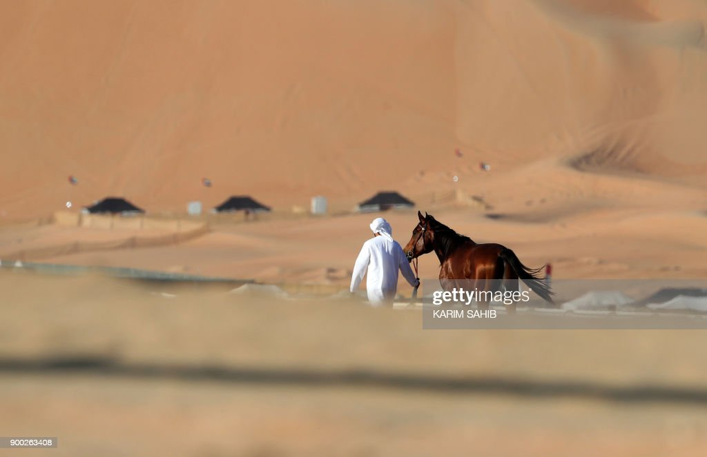 A handler leads a purebred Arab horse ahead of a race for purebred Arab horses during the Liwa 2018 Moreeb Dune Festival on January 1, 2018, in the Liwa desert, some 250 kilometres west of the Gulf emirate of Abu Dhabi. /