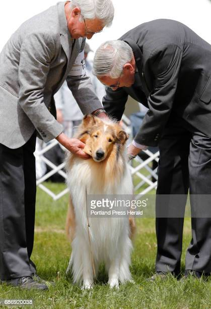 Handler Paul Levesque left shows Sable Rough Collie 'Luke' to judge Brian Meyer right Sunday May 21 2017 during the Maine Coastal Classic Dog Show in...