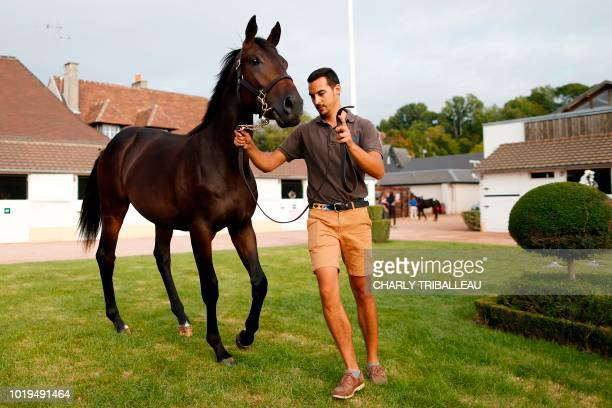 A handler presents son of Dubawi and Just the Judge from 'La Motteraye Consignment' and sold for 1000 euros during during the yearlings sales one of...