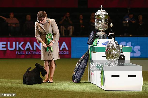 Handler Rebecca Cross with Knopa the Scottish Terrier as they celebrate winning the Best in Show category of Crufts 2015 on the fourth and final day...