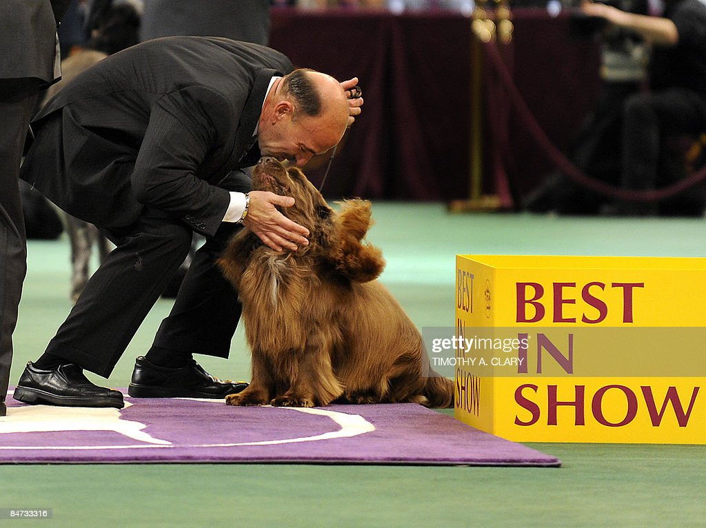 champion dogs compete at westminster dog showの写真およびイメージ
