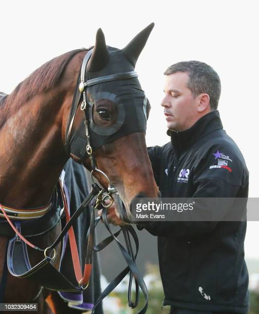 Handler Umut Odemislioglu with Winx after a trackwork session at Rosehill Gardens on September 13 2018 in Sydney Australia
