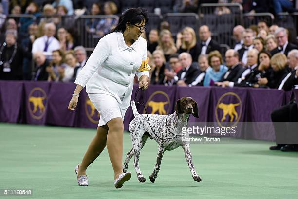 Handler Valerie NunesAtkinson and CJ a German Shorthaired Pointer win 'Best In Show' during the second day of competition at the 140th Annual...