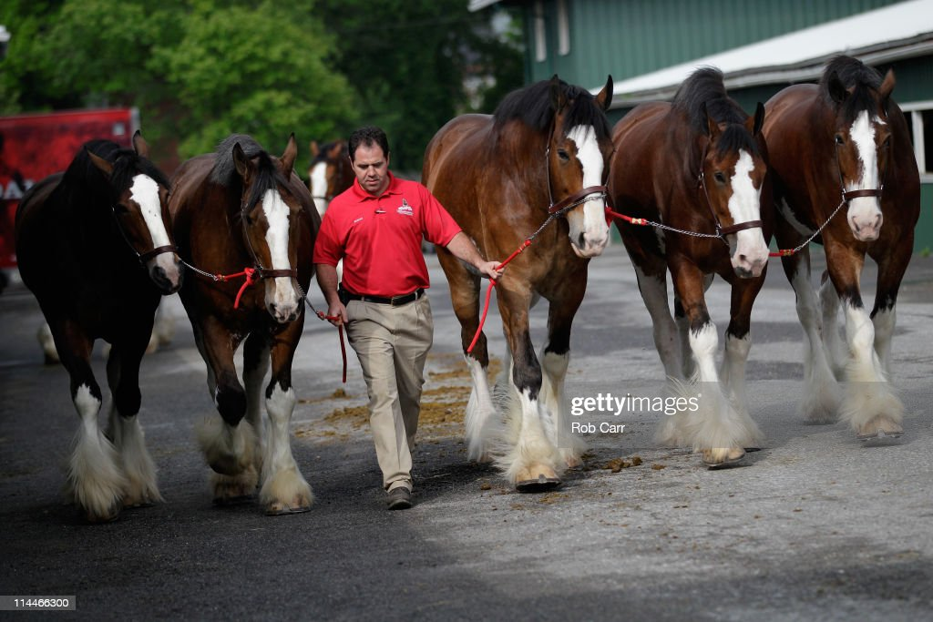 Preakness Preview : News Photo