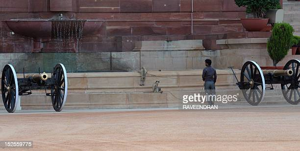 A handler walks with a pair of langurs next to cannons on display at the Presidental Palace in New Delhi on September 21 2012 Langurs large Old World...