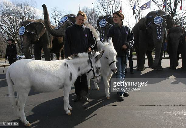 Handlers from the Ringling Brothers and Barnum Bailey circus watch donkeys and elephants in front of Washington's Union Station 21 March 2005 during...