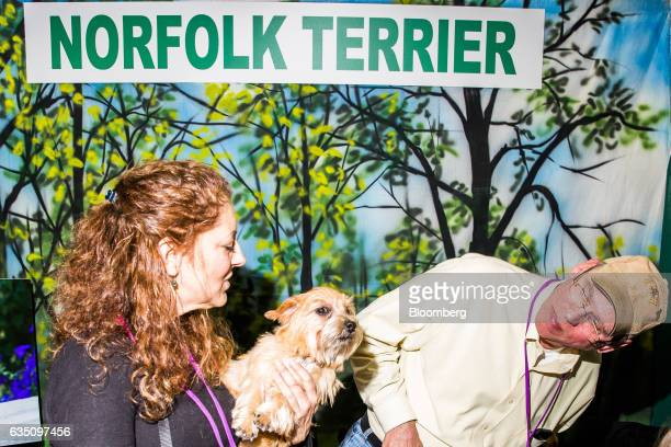 Handlers hold a Norfolk Terrier dog during the annual Meet the Breed event ahead of the 141st Westminster Kennel Club Dog Show in New York US on...