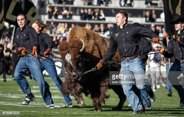 Handlers run Ralphie around the stadium to lead the Colorado football team onto the field before the Colorado Buffalos game versus the USC Trojans on...