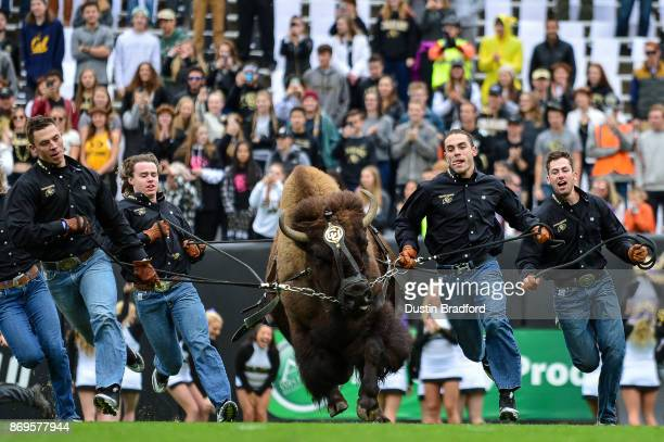 Handlers run with Colorado Buffaloes mascot Ralphie before a game between the Colorado Buffaloes and the California Golden Bears at Folsom Field on...