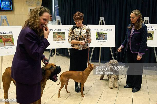 Handlers stand with their dogs following an announcement that the Westminster Dog Show would introduce seven new dog breeds into the annual...