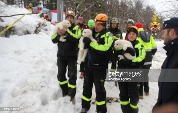 A handout photograph provided by the Italian Fire Department shows rescue crews hold pets as they make search and rescue works in the area of the...