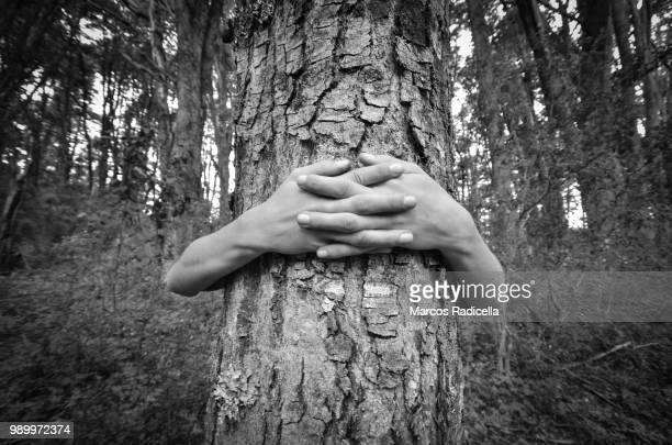 hands embracing tree - radicella bildbanksfoton och bilder