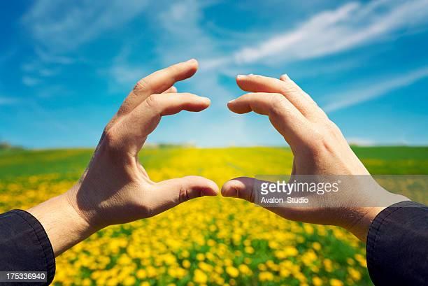Manos que forman un cuadro en un campo amarillo con flores