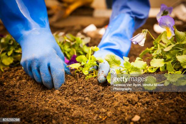 hands gardening - vanessa van ryzin stock photos and pictures