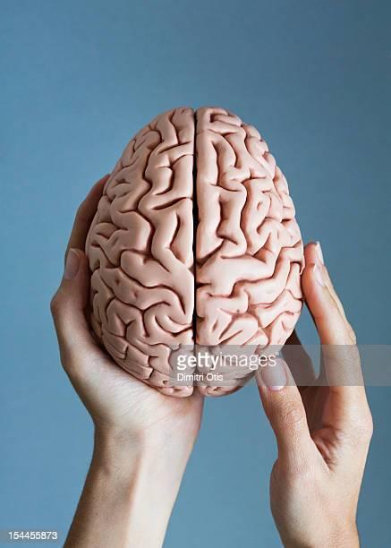 hands gently holding human brain - cerebro humano fotografías e imágenes de stock