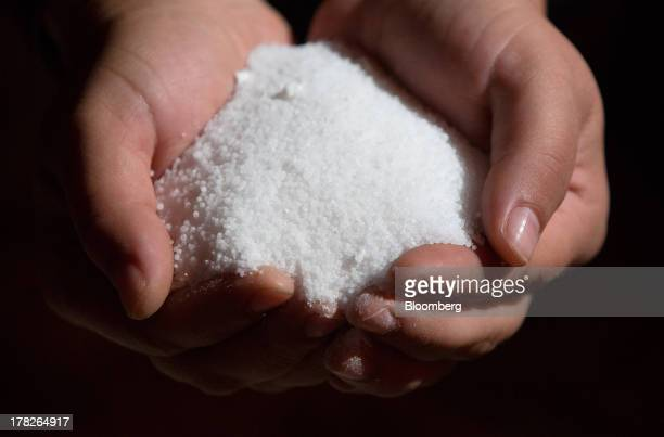 Hands hold grains of potassium chloride also known as potash in this arranged photograph at a mine operated by OAO Uralkali in Berezniki Russia on...