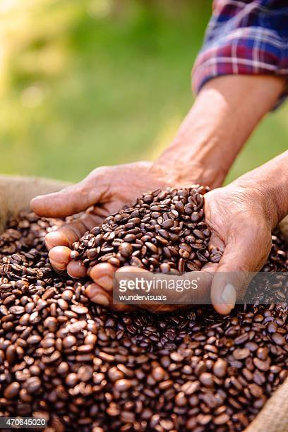 Hands holding a crop of aromatic coffee beans