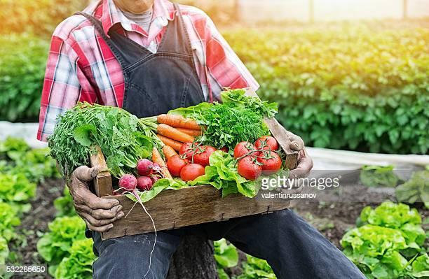 Hände halten Rost mit frischem Gemüse
