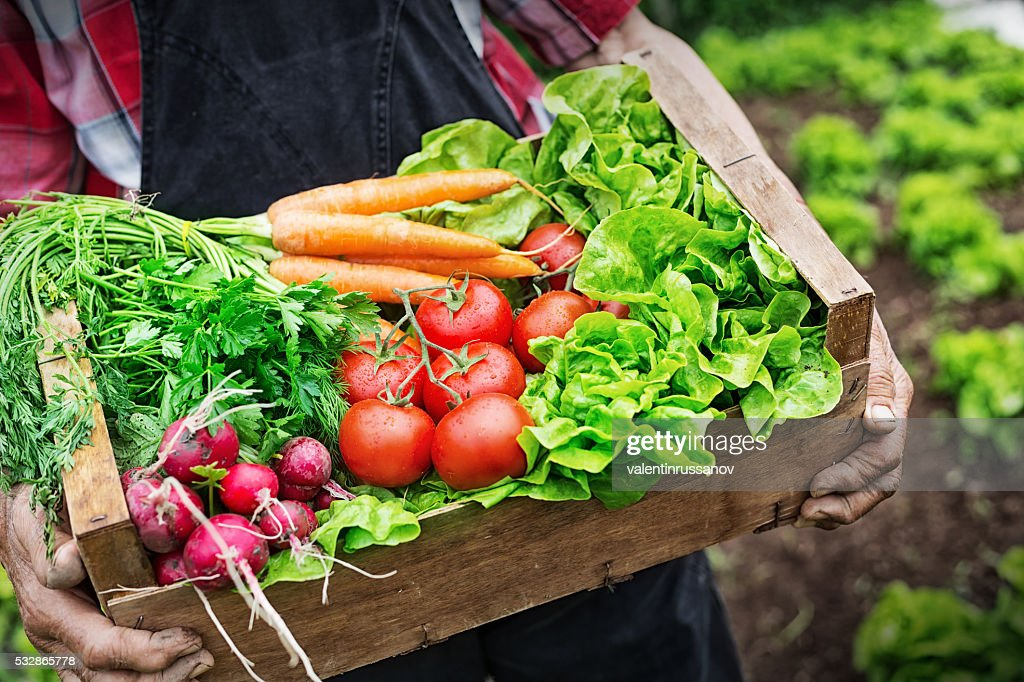 Hands holding a grate full of fresh vegetables : Stock Photo