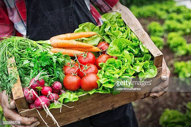 hands holding a grate full of fresh vegetables - freshness stockfoto's en -beelden