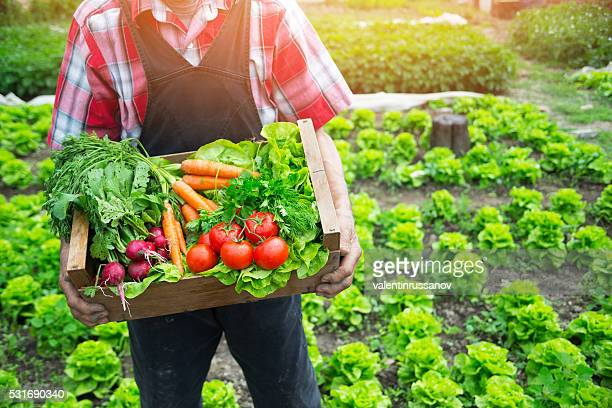 hands holding a grate full of raw vegetables - local produce stock pictures, royalty-free photos & images