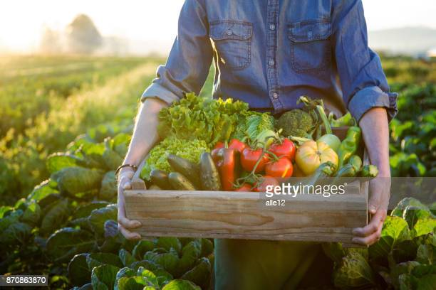 Hands holding a grate of raw vegetables