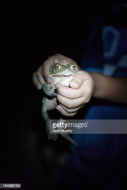 Hands holding a Large Toad