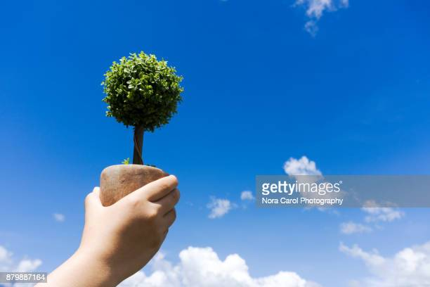 Hands Holding a Plant Against Blue Sky