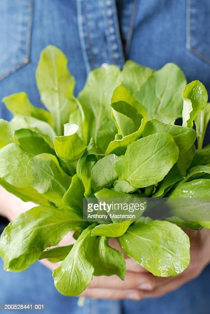 hands holding bunch of arugula - anthony-masterson stock pictures, royalty-free photos & images