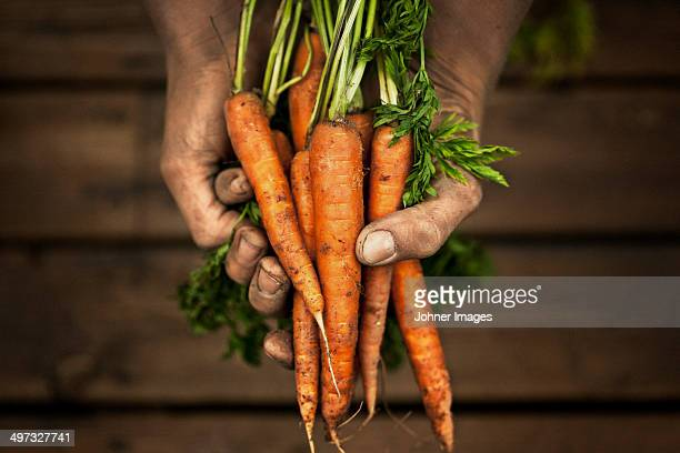 Hands holding carrot, studio shot