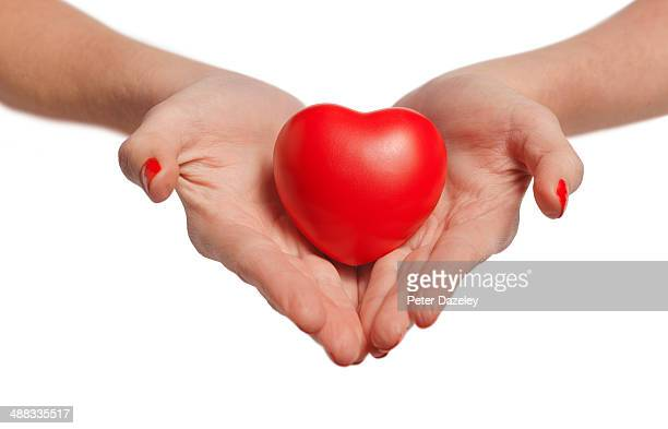 hands holding heart on white background - affectionate stock photos and pictures
