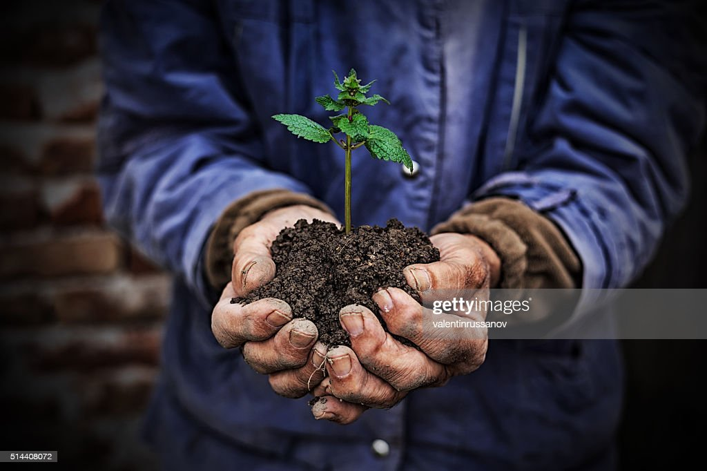 Hands holding new growth plant-dark background : Stock Photo