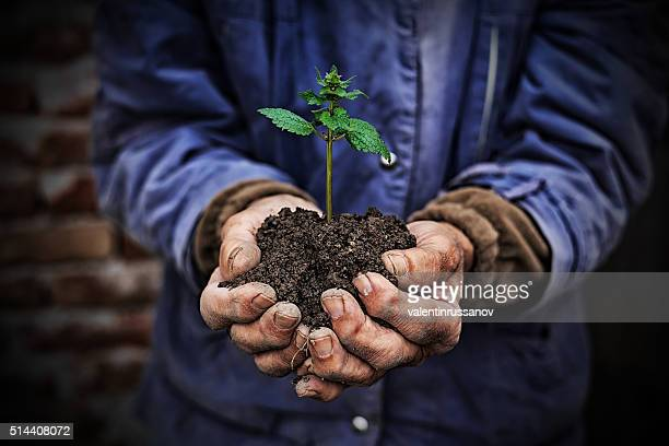 Mãos segurando novo crescimento de planta-fundo escuro
