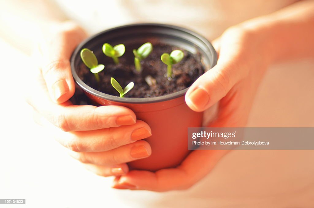 Hands holding plants : Stock Photo