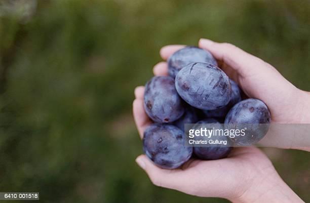 hands holding plums - ciruela fotografías e imágenes de stock