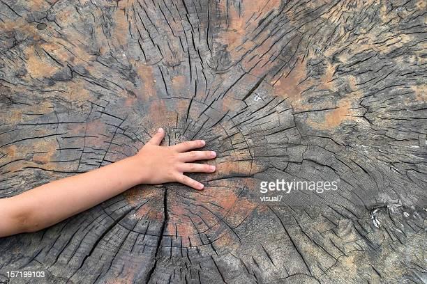 Hände holding sparen forest