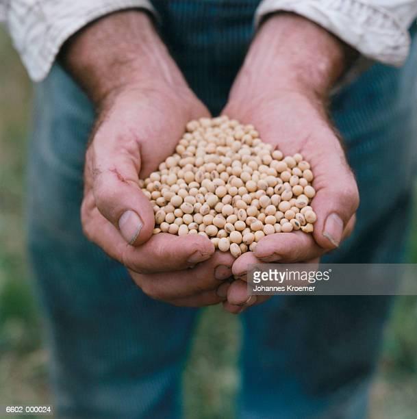 hands holding soya beans - feijão - fotografias e filmes do acervo