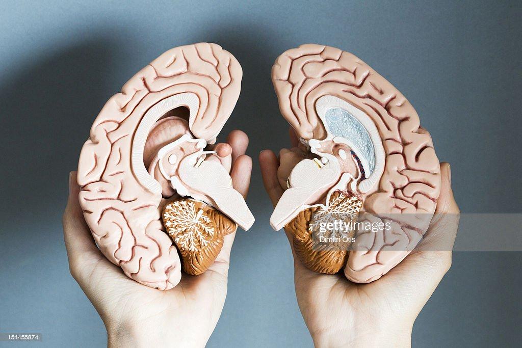 Hands holding two hemispheres of human brain : Stock Photo