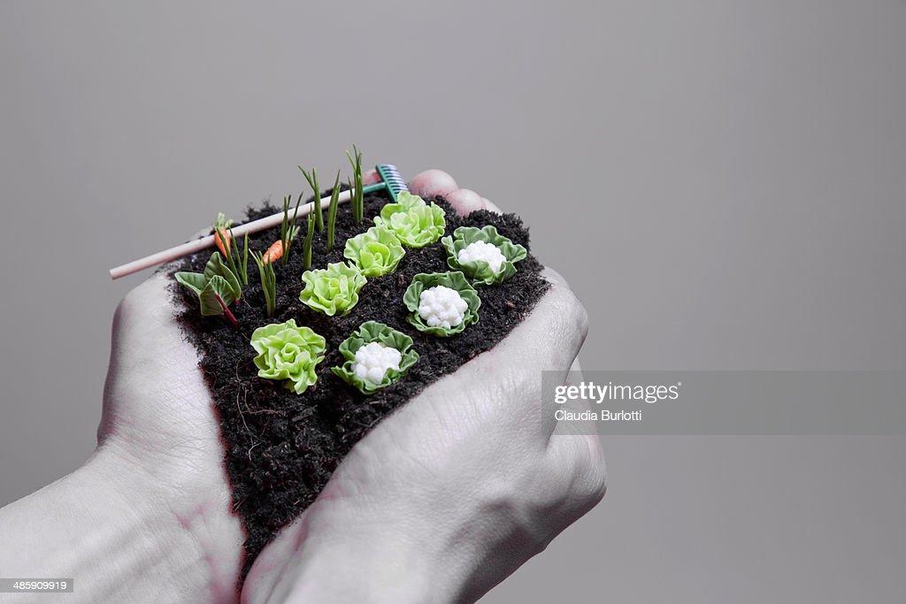 hands holding vegetable garden : Stock Photo