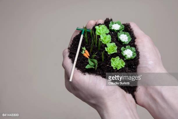 Hands Holding Vegetable Garden