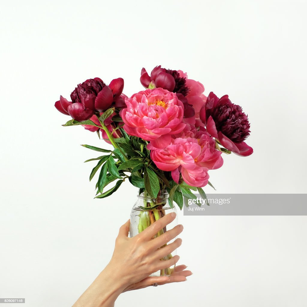 Hands holding vibrant pink flowers in jar : Stock Photo