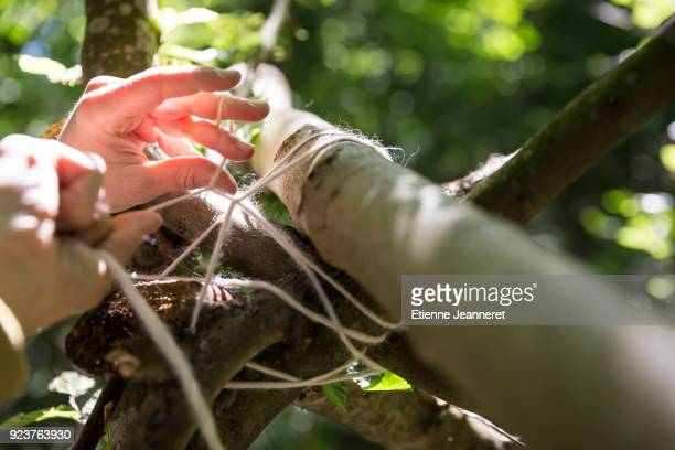 hands knoting around branches, paris, france - shack stock pictures, royalty-free photos & images
